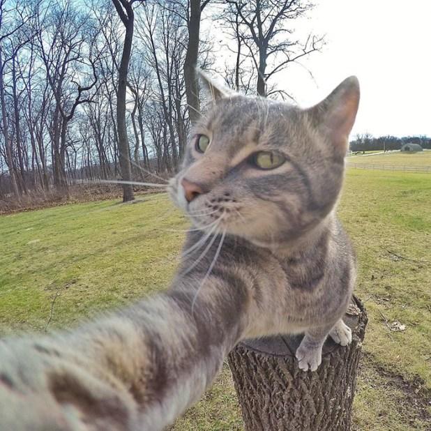 gato-manny-selfies-camara-gopro-6