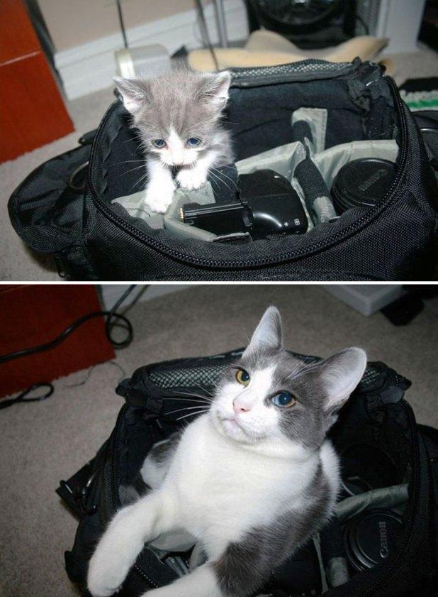 gatos-creciendo-antes-despues-1 (1)