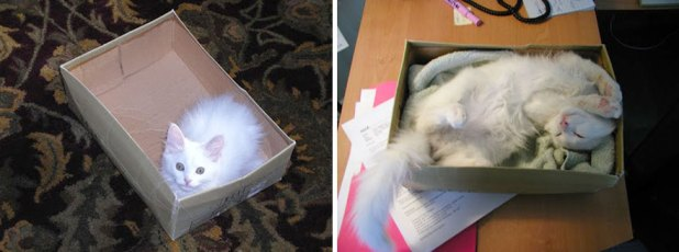 gatos-creciendo-antes-despues-19