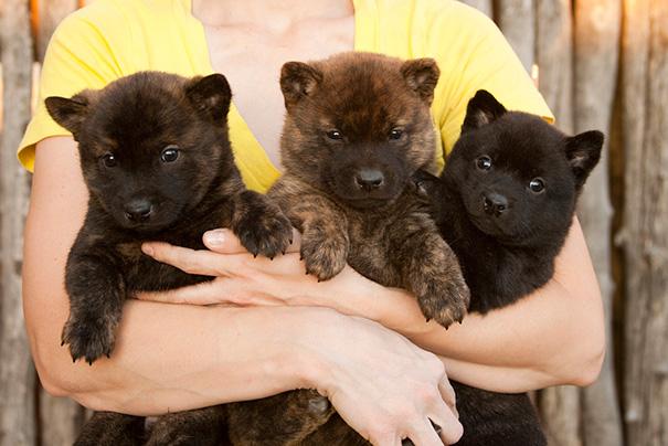 perros-regordetes-oseznos-parecidos-2-14