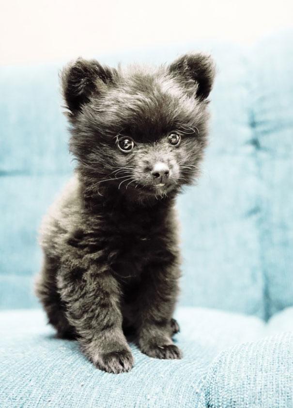 perros-regordetes-oseznos-parecidos-2-3