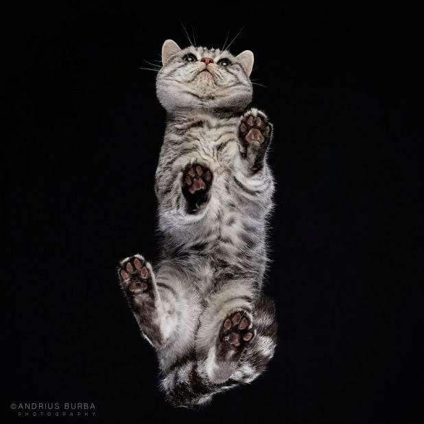 under-cats-fotos-gatos-debajo-andrius-burba-13