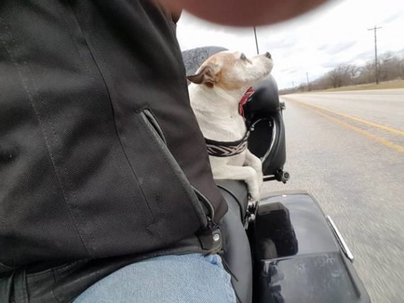 01-mr-davidson-biker-dog