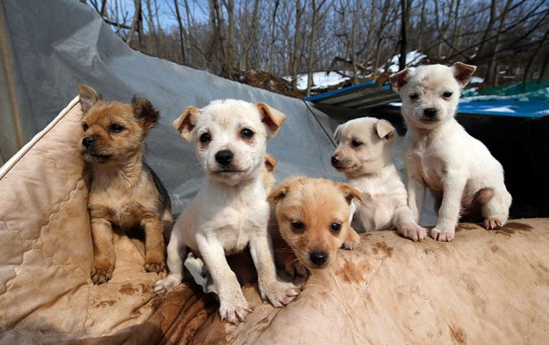 200-perros-rescatados-jung-myoung-sook-corea-sur-1