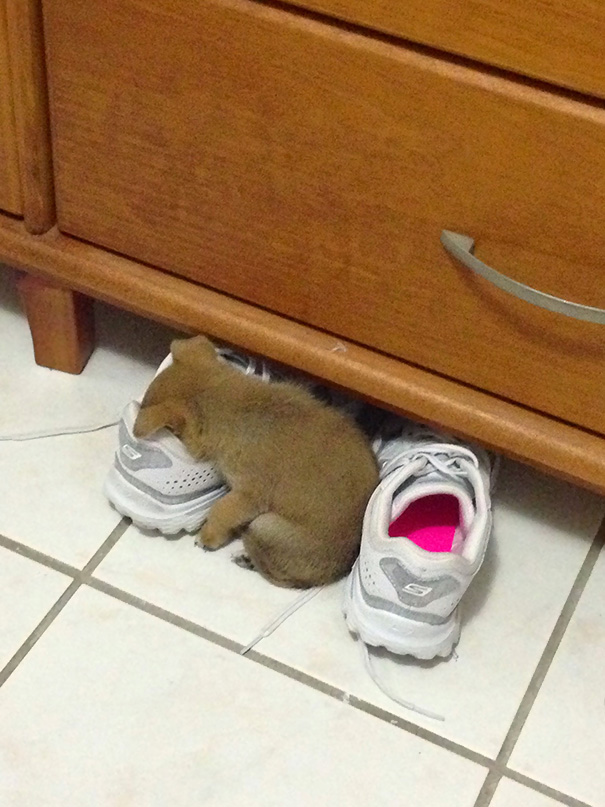 animales-durmiendo-cualquier-sitio-5