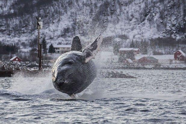 dia-mundial-ballenas-1
