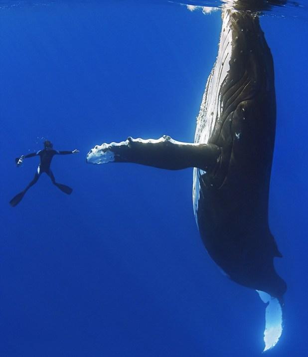 dia-mundial-ballenas-13