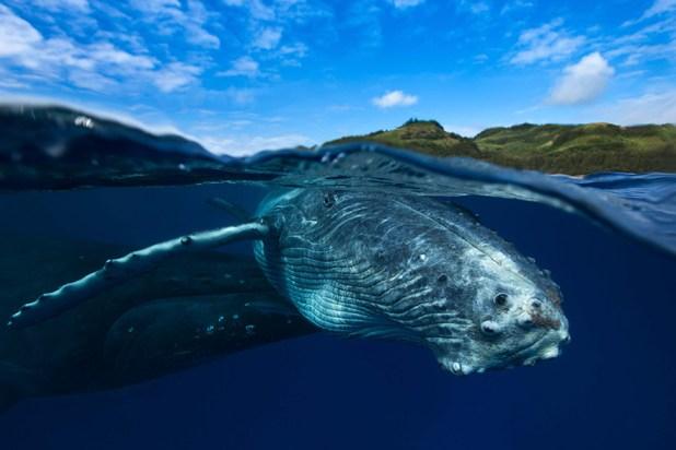 dia-mundial-ballenas-32