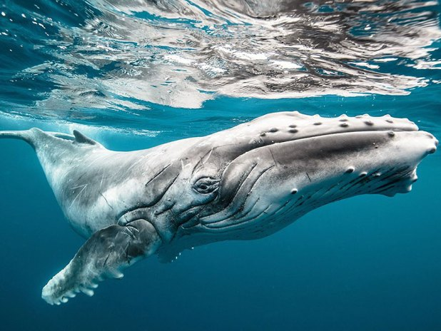 dia-mundial-ballenas-5