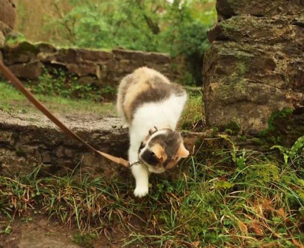 gato-ciego-rescatado-excursiones-stevie-irlanda-3