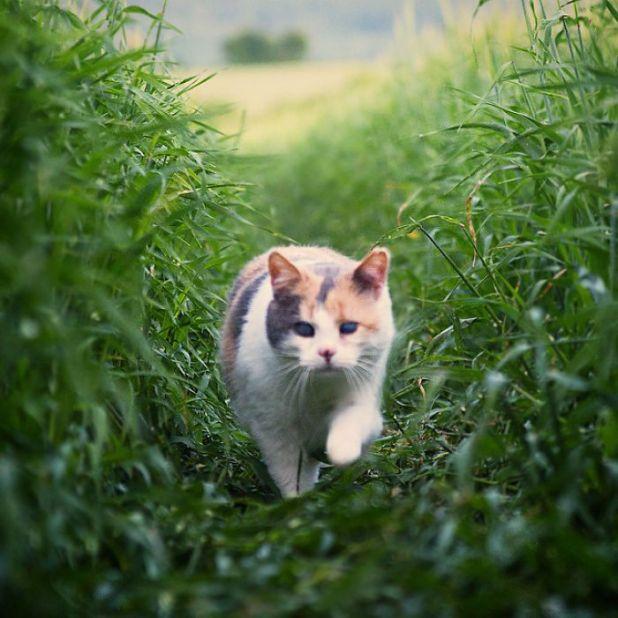 gato-ciego-rescatado-excursiones-stevie-irlanda-4