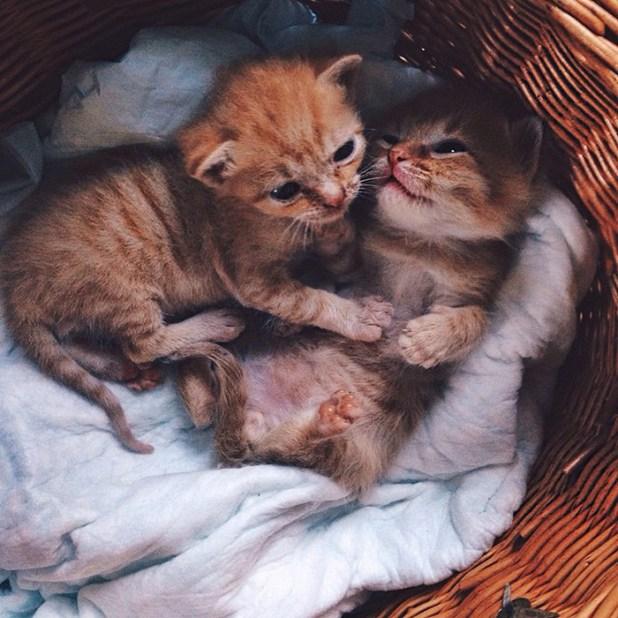 gatos-hermanos-huerfanos-rescatados-anyagrapes-15