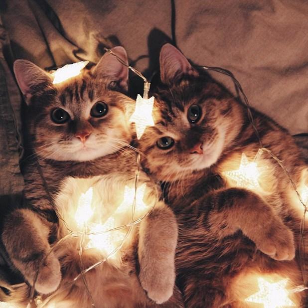 gatos-hermanos-huerfanos-rescatados-anyagrapes-9