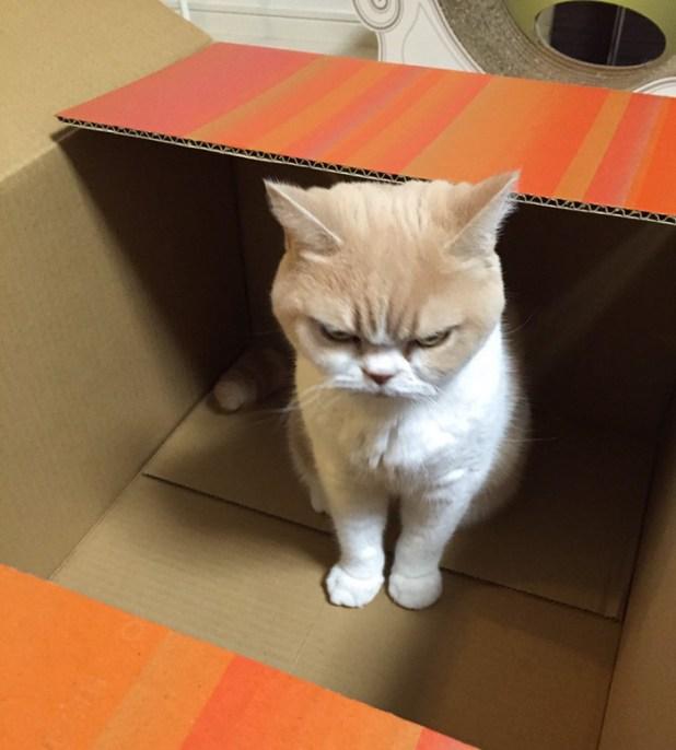 koyuki-gato-enfadado-japones-1