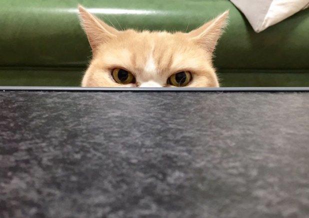koyuki-gato-enfadado-japones-13