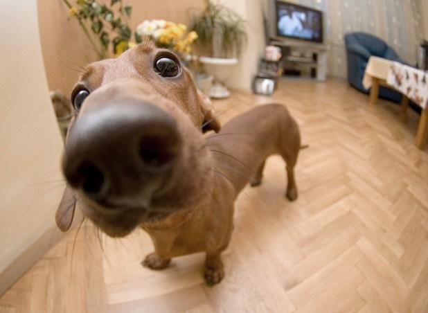 narices-perros-cerca-6