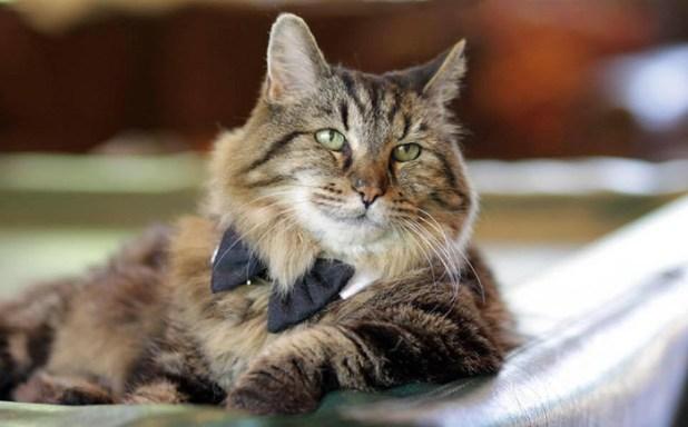 record-gato-viejo-mundo-corduroy-15