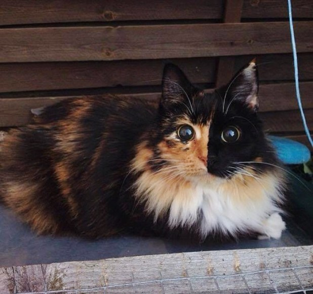 gato-ciego-quimera-adoptado-jasmine-sandra-coudray-10