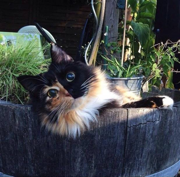 gato-ciego-quimera-adoptado-jasmine-sandra-coudray-7