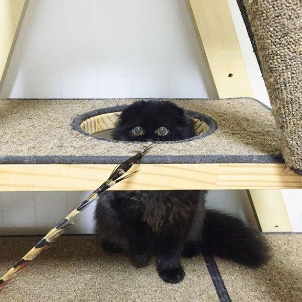 gato-negro-adorable-ojos-grandes-gimo-11