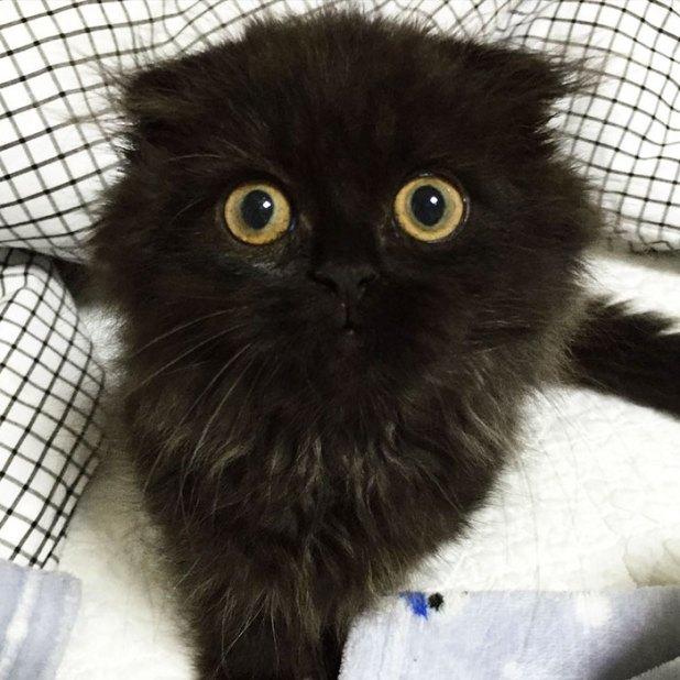 gato-negro-adorable-ojos-grandes-gimo-15