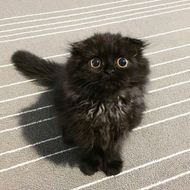 gato-negro-adorable-ojos-grandes-gimo-16