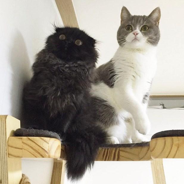 gato-negro-adorable-ojos-grandes-gimo-6