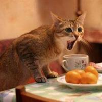 Mira como hacer para que tu gato no se suba en la mesa
