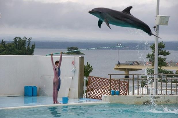Delfín-realizando-trucos