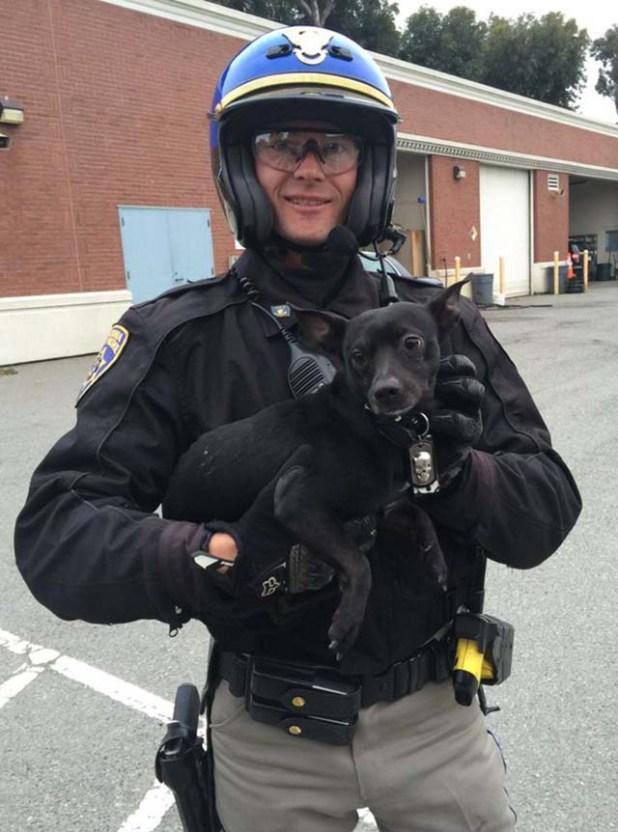 Policía-salva-a-un-perro