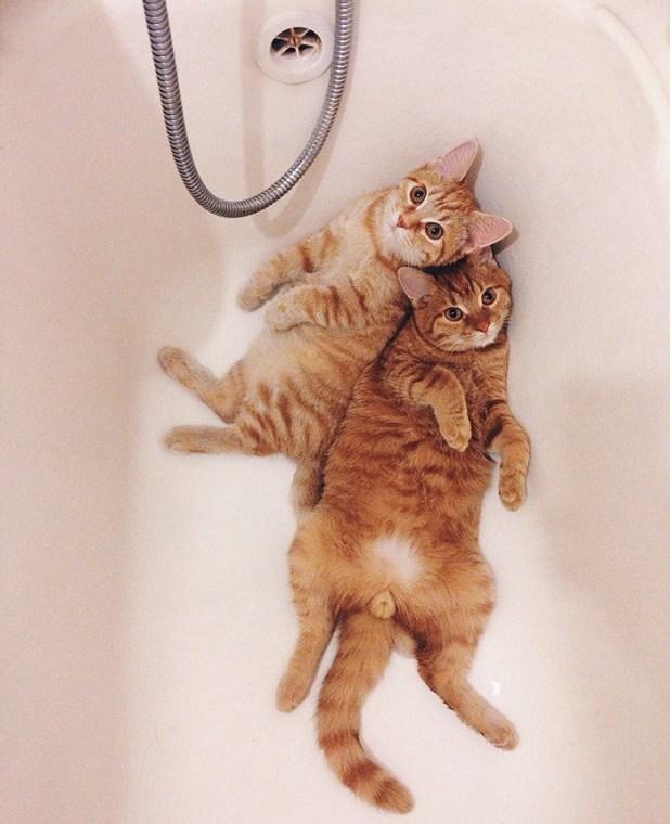 gatos-hermanos-huerfanos-rescatados-anyagrapes-11