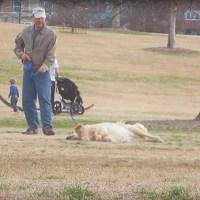 Este Ingenioso Perro Se Hace El Muerto Para Quedarse Más Tiempo En El Parque