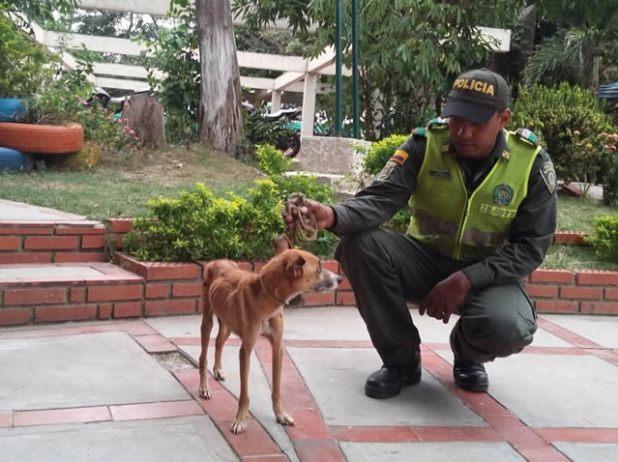 policia rescata perrito