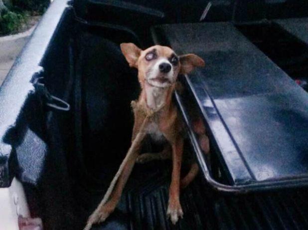 policia rescata perrito1