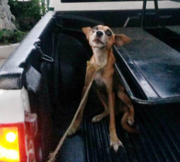 policia rescata perrito2
