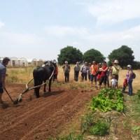Valencia: Granja Ecológica Experimental La Peira