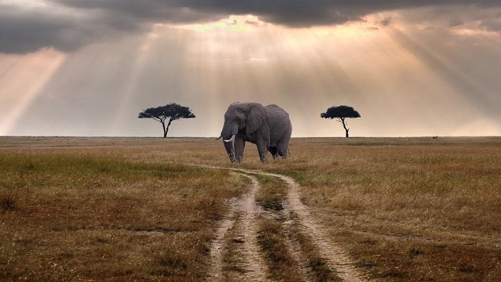 Kenya: Reserva Nacional Masai Mara