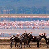 Tanzania: Lago Manyara
