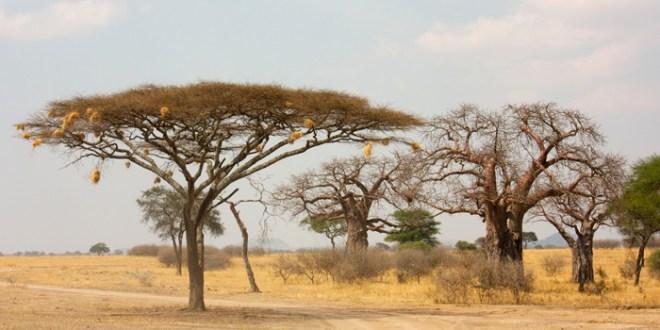 Tanzania: Parque Nacional de Tarangire