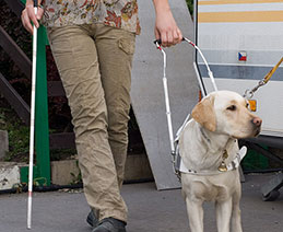 A guide dog is assisting a woman as she goes for a walk.