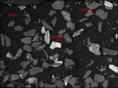 Backscattered electron image (BEI) of a cross-section of pulverized coal showing coal particles (gray) and mineral grains (white).
