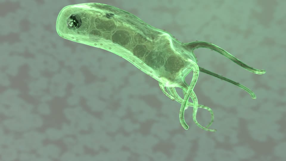 674421393-gastrite-ulcera-helicobacter-pylori-stomaco