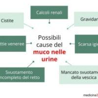 Quando i batteri sono causa di muco nelle urine ?
