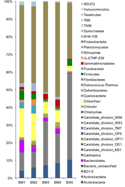 Abbondanze relative dei gruppi batterici a livello di phylum nei 5 campioni di sedimenti nella zona umida a mangrovie di Bamenwan (Scientific Reports, 2019).