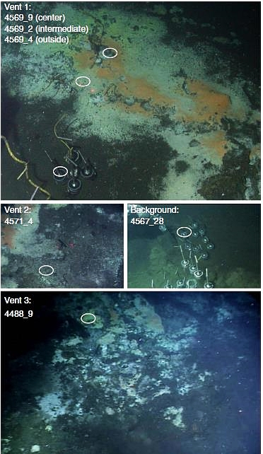 Messico, uno studio documenta biodiversità e versatilità metabolica dei microbi nei sedimenti marini idrotermali. Panoramica dei siti di campionamento.