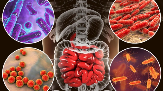 microbiota microbiologia italia