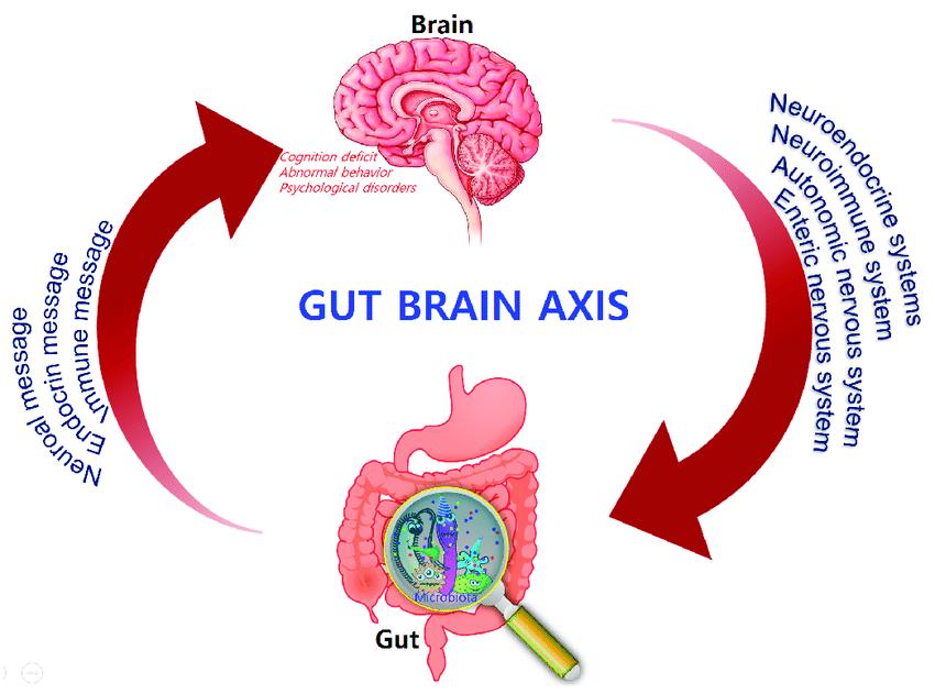 Asse tra microbiota intestinale - intestino e sistema nervoso che influenza l´eventuale genesi di processi infiammatorio che colpiscono il cervello