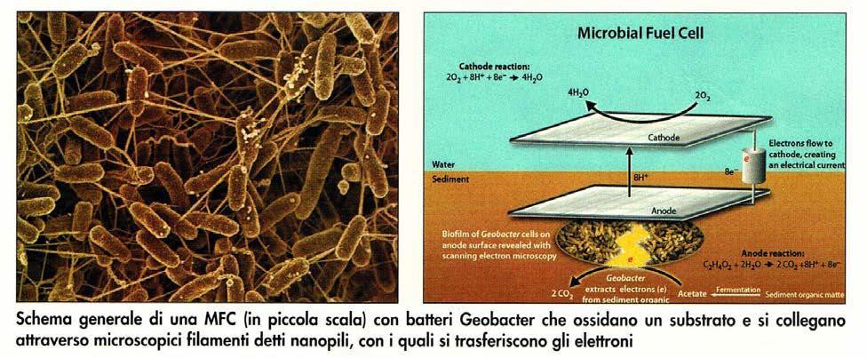 Schematizzazione di una cella a combustibile microbica (MFC)