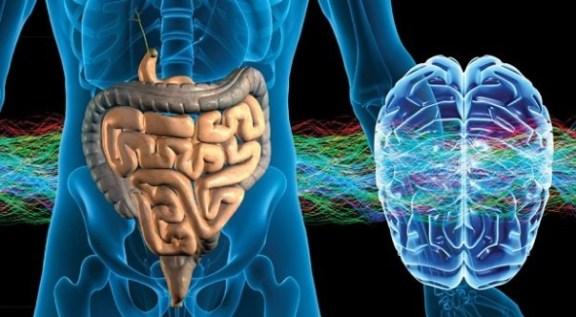 L´alterazione del microbiota (disbiosi) causa un aumento della permeabilità che può favorire alle molecole infiammatorie di entrare nel cervello con BEE compromessa.