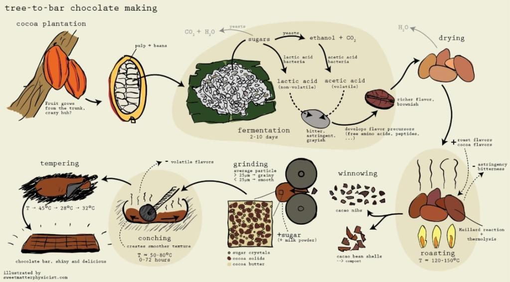 fermentazione cacao